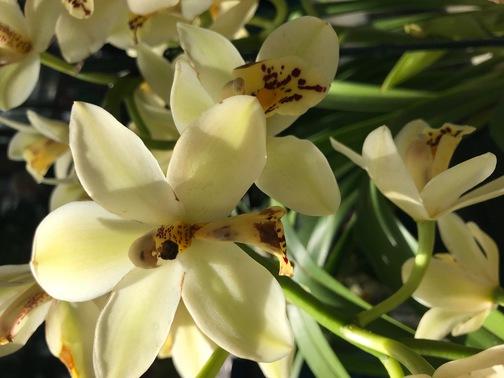 Cream bouquet